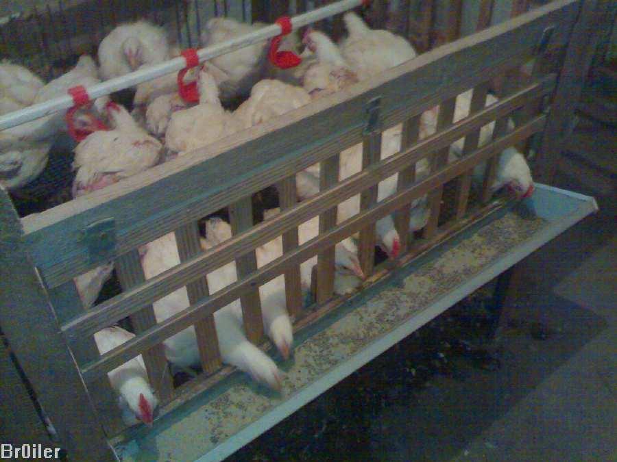 Сделать клетку для цыплят бройлеров своими руками 7