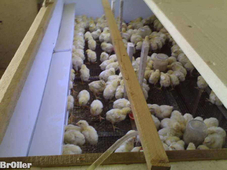 Брудер на 150 - 200 шт. цыплят бройлера