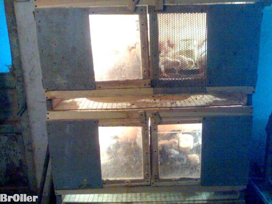 Трех ярусный брудер на 150 шт. цыплят